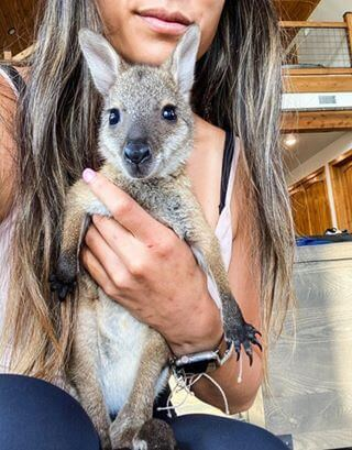 Bennetts Wallaby For Free